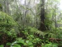 Forêt de nuages_Marc Gayot