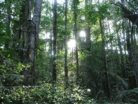 Forêt dense sempervirente humide_Luc Ackermann