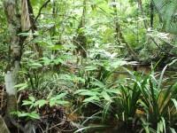 Forêt ripicole Luc Ackermann