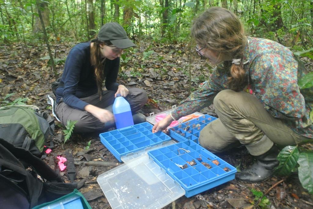 Inventaire des champignons de La Trinité _ Luc Ackermann